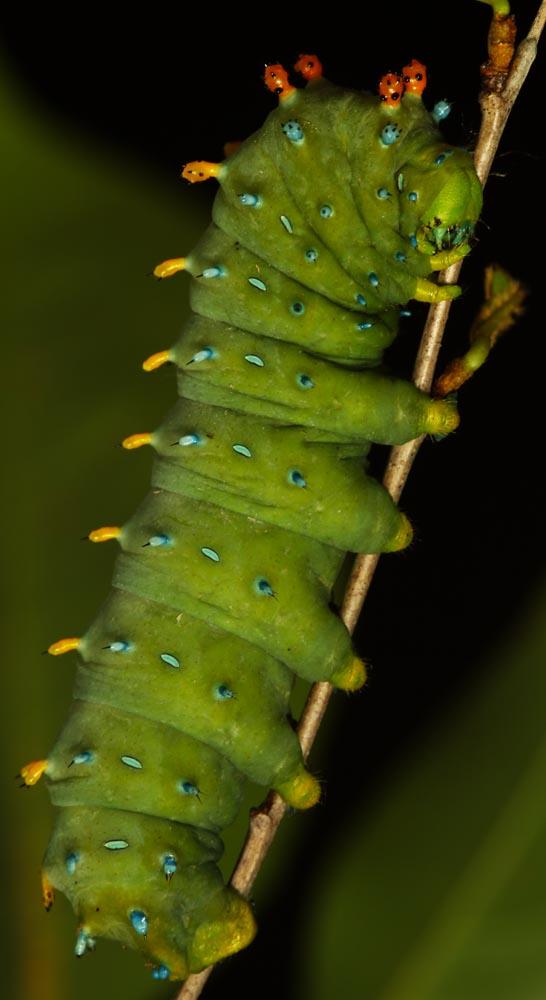 006-Caterpillar.jpg
