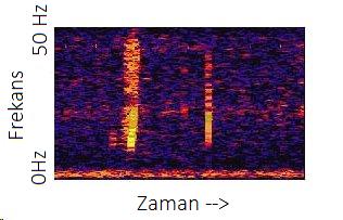 scp169spektogram.jpg